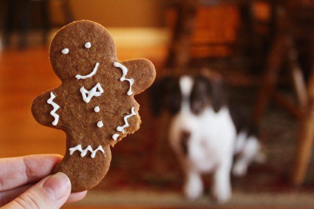Ideálním cukrovím pro psy jsou perníčky z žitné mouky slazené medem nebo melasou
