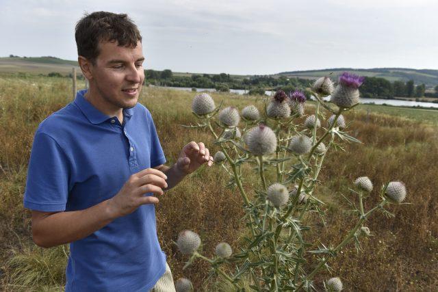 Soukromý zemědělec Martin Smetana ukazuje pcháč rostoucí na jeho pozemcích v okolí Blatničky na Hodonínsku, kde začal dělat opatření prospěšná pro krajinu.