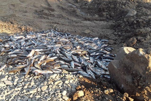 Uhynulé ryby z Bečvy | foto: HZS Olomouckého kraje
